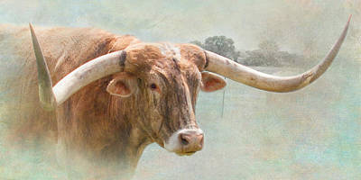 Longhorn Photograph - Portrait Of A Texas Longhorn by David and Carol Kelly