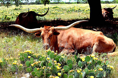 Texas Longhorns 2 Art Print by Linda Cox