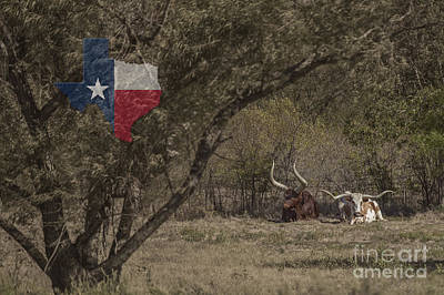 Photograph - Texas Longhorns by D Wallace