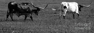 Photograph - Texas Longhorns II by Anita Lewis