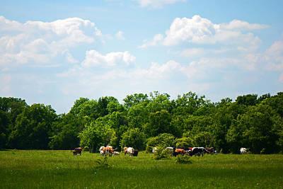 Photograph - Texas Longhorns In Springtime by Connie Fox