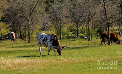 Photograph - Texas Longhorns by Janette Boyd