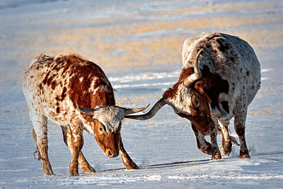 Texas Longhorns Art Print by Lena  Owens OLena Art