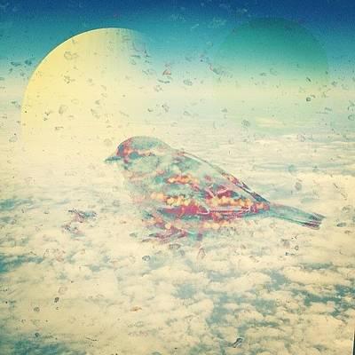 Finch Wall Art - Photograph - Little Bird In Texas Sky by Jennifer Martin