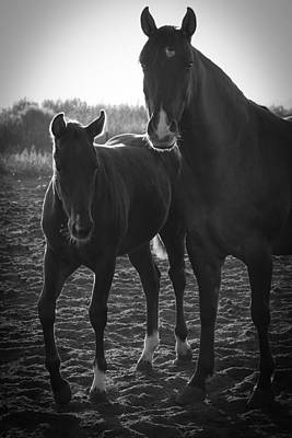 Photograph - Texas Mare by Diane Bohna