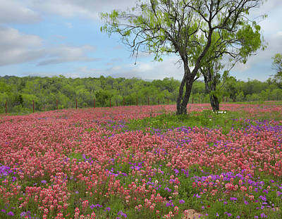 Phlox Photograph - Texas Paintbrush And Pointed Phlox by Tim Fitzharris