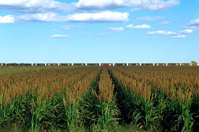 Sorghum Photograph - Texas Panhandle by Jerry McElroy
