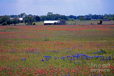Photograph - Texas Prairie In April by Connie Fox