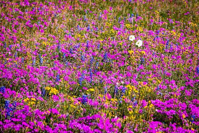 Target Threshold Nature - Texas Roadside Wildflowers 667 by Melinda Ledsome