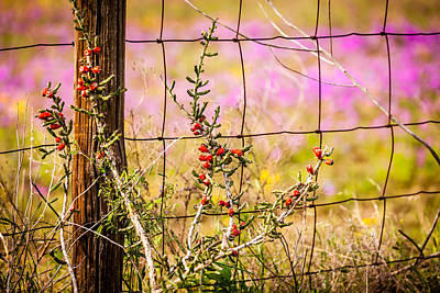Photograph - Texas Roadside Wildflowers 674 by Melinda Ledsome