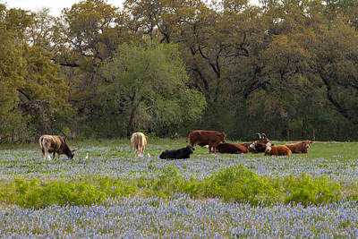 Photograph - Texas Roadside Wildflowers 681 by Melinda Ledsome
