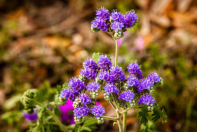 Photograph - Texas Roadside Wildflowers 693 by Melinda Ledsome