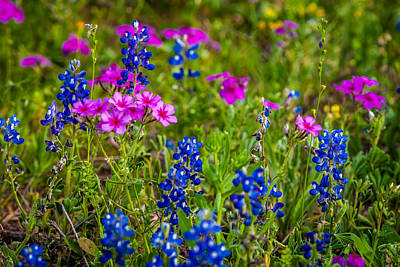 Photograph - Texas Roadside Wildflowers 733 by Melinda Ledsome