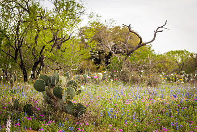Photograph - Texas Roadside Wildflowers 759 by Melinda Ledsome