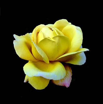 John Tidball Photograph - Texas Rose by Bishopston Fine Art