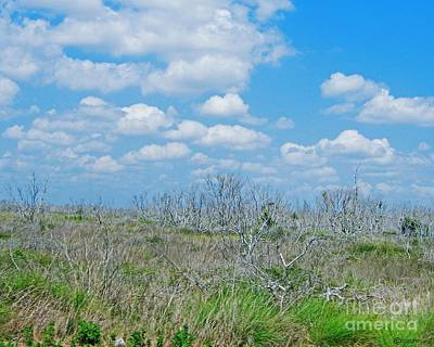 Photograph - Texas Scrub by Lizi Beard-Ward