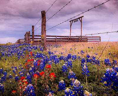 Texas Spring Fence Art Print