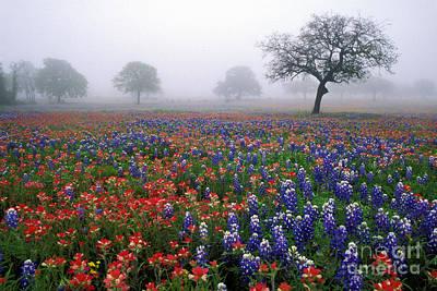 Texas Spring - Fs000559 Art Print by Daniel Dempster