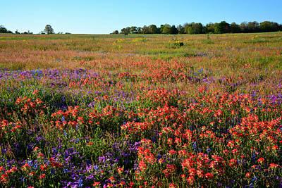 Texas Spring Wildflowers Art Print by Lynn Bauer