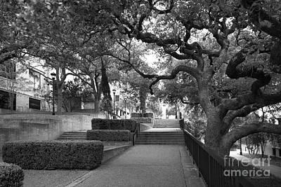 Photograph - Texas State University Landscape by University Icons