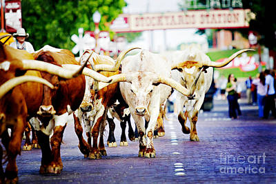 Cattle Drive Photograph - Texas Stockyards by Katya Horner