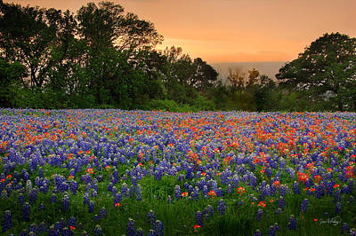 Paintbrush Photograph - Texas Sunset - Bluebonnet Landscape Wildflowers by Jon Holiday