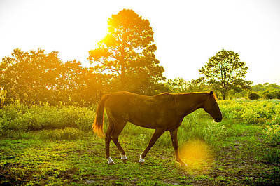 Photograph - Texas Sunset by David Morefield