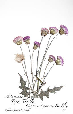 Photograph - Texas Thistle by Roberta Jean Smith