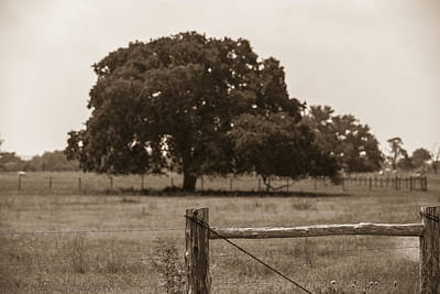 Photograph - Texas Tree And Fence In Sepia  by John McGraw