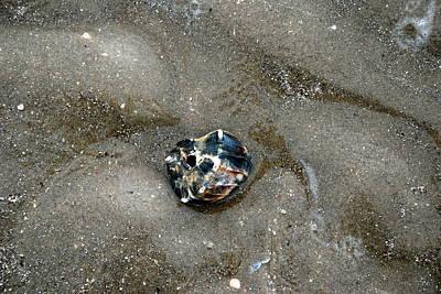 City Lights - Texas Walk - Beach Shell by M E Wood