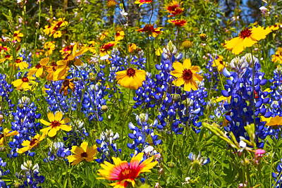 Art Print featuring the photograph Texas Wildflowers by John Babis