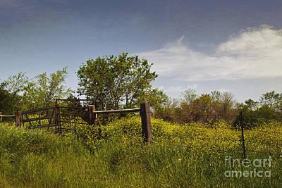 Agriculture Digital Art - Texas Yellow Wildflowers by Elena Nosyreva