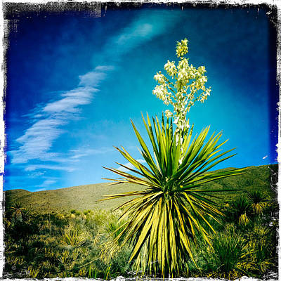 Photograph - Texas Yucca And Clouds by Randy Green