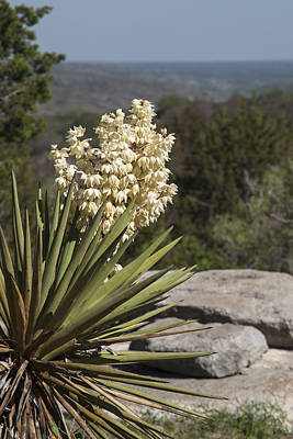 High Park Wildfire Photograph - Texas Yucca by William Bunce
