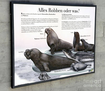 Painting - Text Example - Seals - Zoo Interpretive Panel by Urft Valley Art