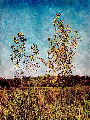 Photograph - Textural Trees by Shawna Rowe
