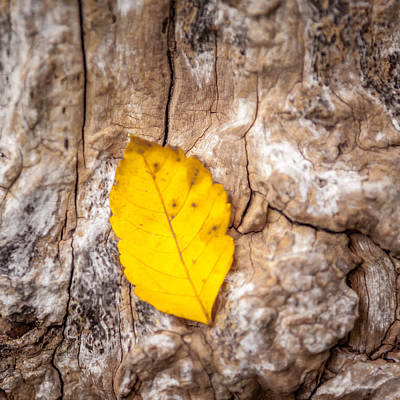 Photograph - Texture And Yellow by Melinda Ledsome