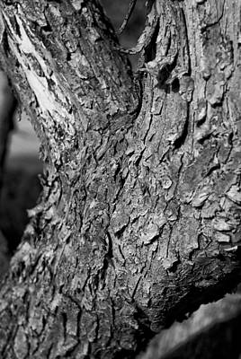 Photograph - Texture In The Trees by Christi Kraft