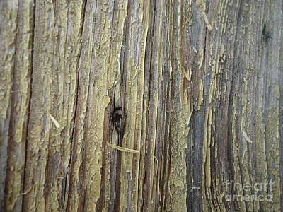 Creative Charisma - Rough Sawn Wood by Paula Talbert