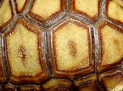 Texture Tortoise Shell Art Print