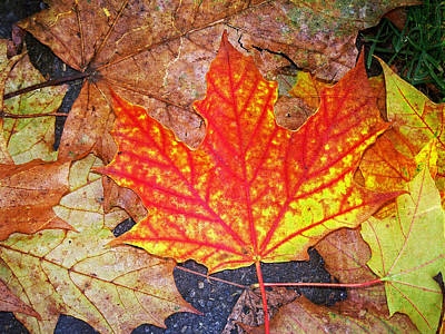 Photograph - Textured Autumn Maple by Tikvah's Hope