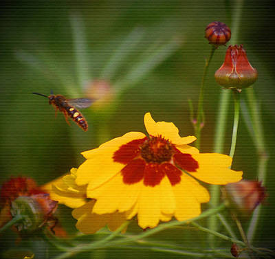 Art Print featuring the photograph Textured Bee by Leticia Latocki