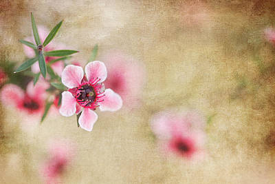 Textured Blossoms Art Print by Terry Ellis