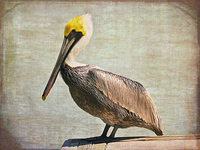 Photograph - Textured Brown Pelican by Kathleen Scanlan