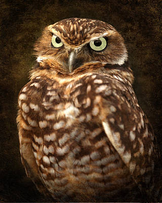 Photograph - Textured Burrowing Owl by Wes and Dotty Weber