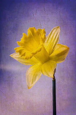 Daffodils Photograph - Textured Daffodil by Garry Gay