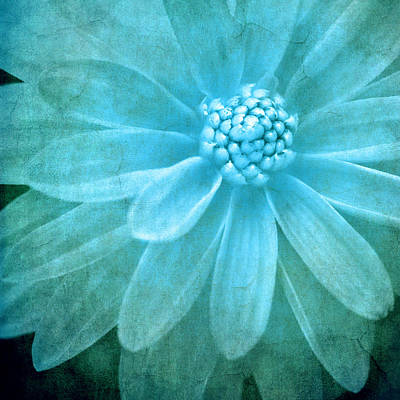 Photograph - Textured Dahlia In Blue by Meirion Matthias