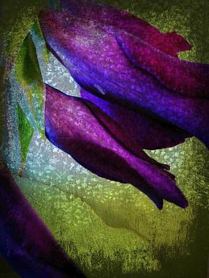 Textured Gladiola Buds Art Print by Shirley Sirois