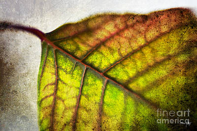 Pellegrin Photograph - Textured Leaf Abstract by Scott Pellegrin