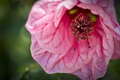 Pink Photograph - Textured Pink by Priya Ghose